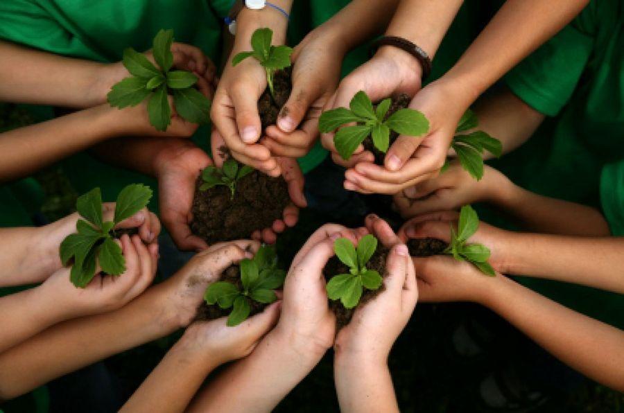 Rav Tzvi Yehuda Kook sobre el vegetarianismo: toda la unidad de la realidad