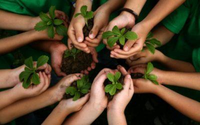 Rav Tzvi Yehuda Kook sur le végétarisme : toute l'unité de la réalité